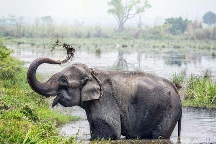 Gajah adalah salah satu binatang paling cerdas
