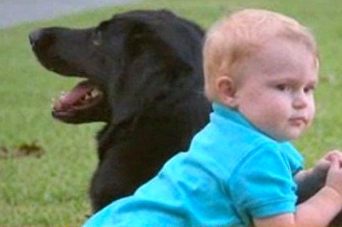 Anjing peliharaan keluarga menyelamatkan bayi dari kekerasan babysitternya