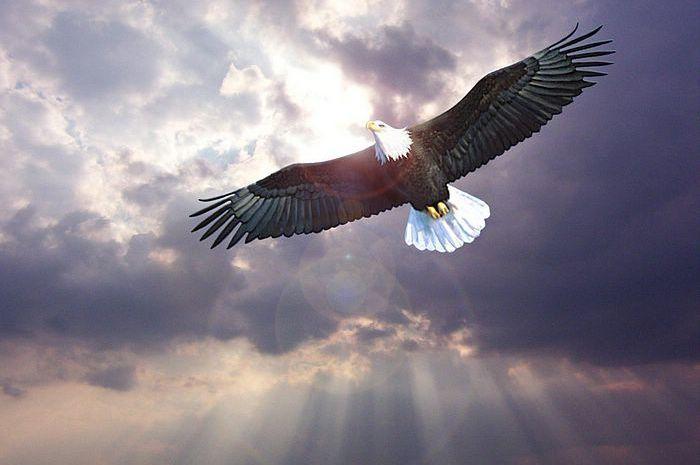 850 Koleksi Gambar Burung Elang Lagi Terbang HD Terbaru