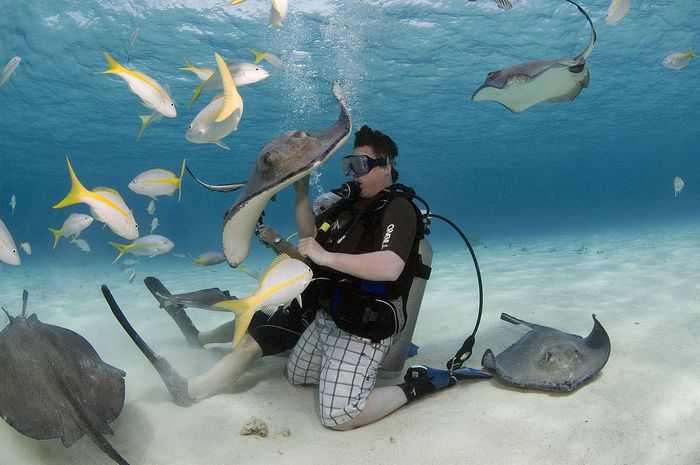 Download 50+ Gambar Ikan Pari Kecil HD Gratis