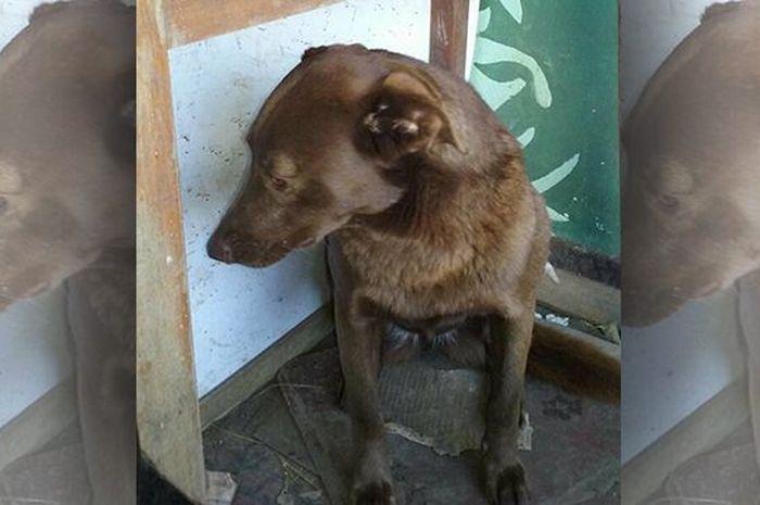 Anjing yang terlihat depresi