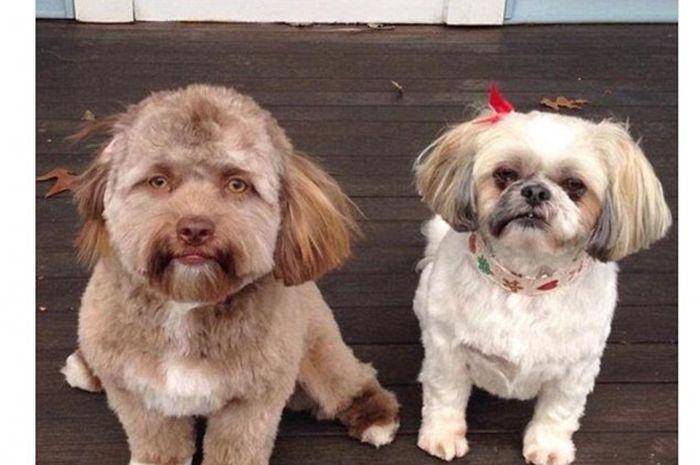 Anjing berwajah mirip manusia