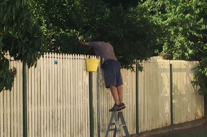 Pohon tetangga yang masuk ke pekarangan apakah boleh kita potong?