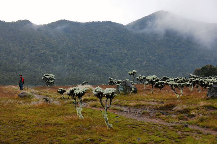 Alun-alun Suryakencana, terletak di antara puncak Gunung Gede (2.958 mdpl) dan puncak Gumuruh.