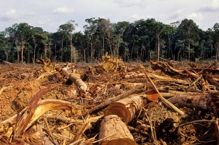 Image result for penebangan hutan