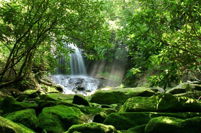 Ilustrasi hutan hujan.
