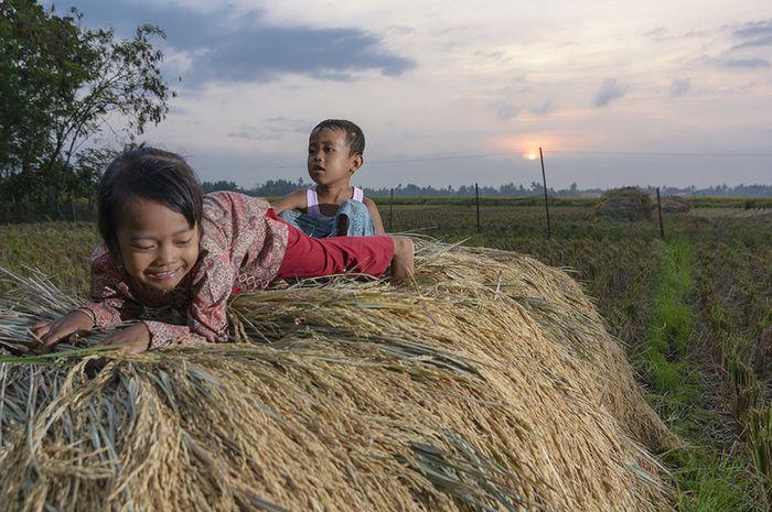 Anis, 5 tahun, bermain di atas tumpukan padi yang baru di panen bersama adiknya Johan, 3 tahun. Sejak zaman VOC sampai hari ini, Jawa masih menjadi lumbung padi nasional.