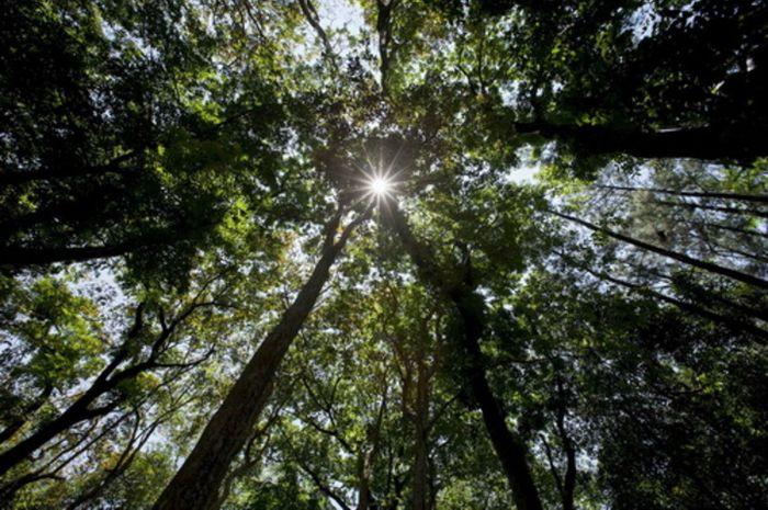 Hutan kawasan Sulawesi yang menyimpan keanekaragaman hayati tinggi.