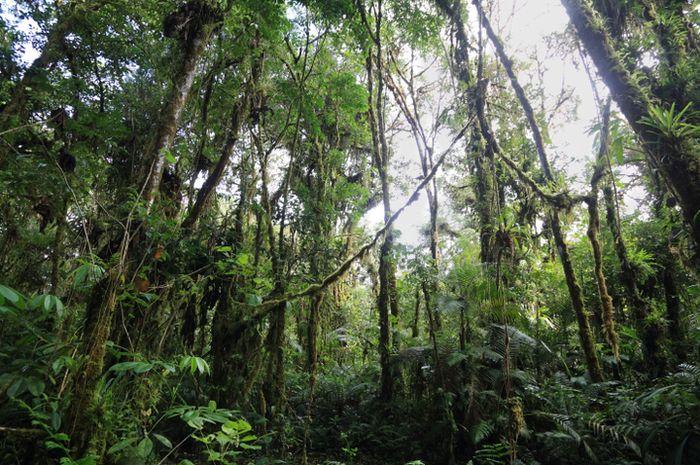 Hutan cagar alam biosfer Sumaco