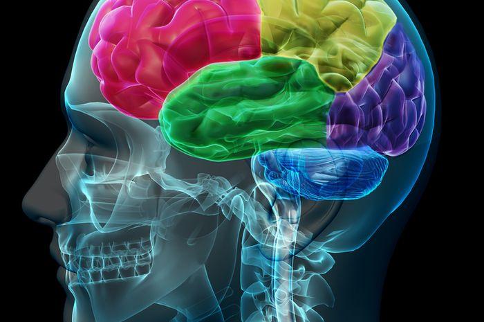 Otak manusia.