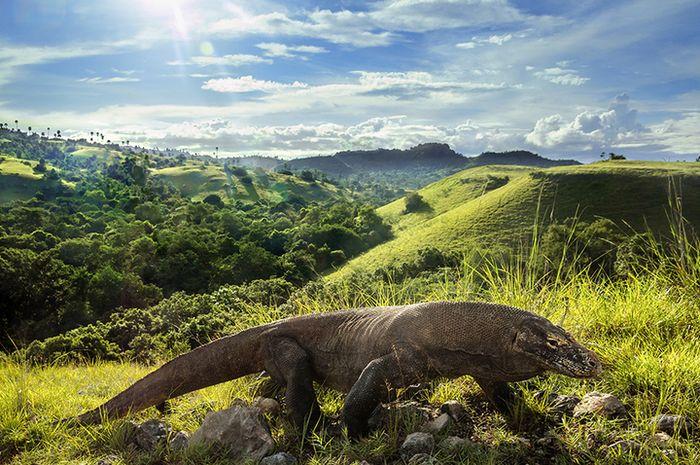 Taman Nasional Komodo.