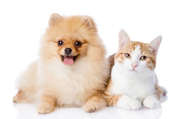 Pertama di dunia, tim ilmuwan China berhasil mengkloning kucing.