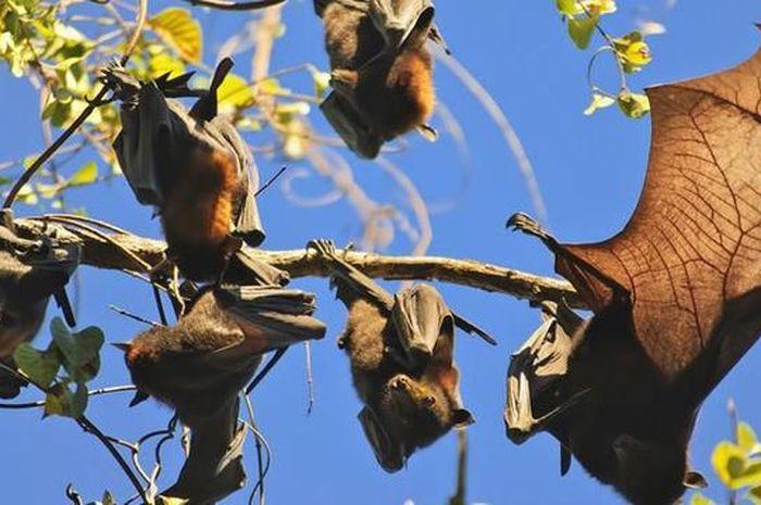Ilustrasi kawanan kelelawar.