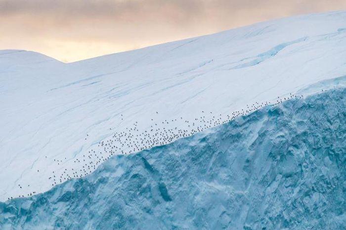Burung beristirahat di sepanjang tepi gunung es di dekat Ilulissat Icefjord di Greenland.