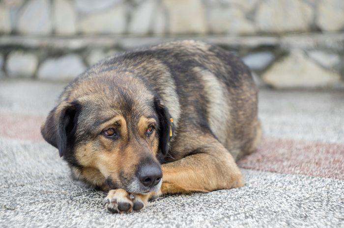 Ilustrasi anjing terlantar.