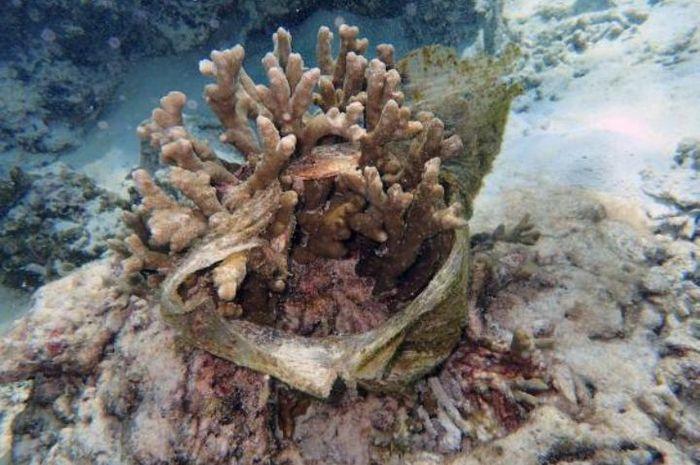 Plastik yang tersangkut pada terumbu karang.