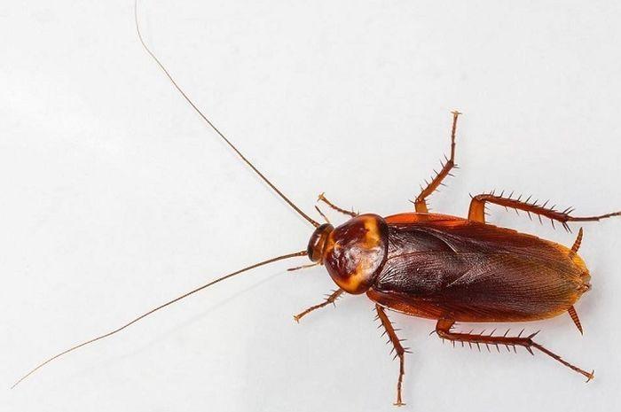 Basmi Lalat, Kecoa, dan Nyamuk Hanya dalam 2 Jam dengan Cairan Ini