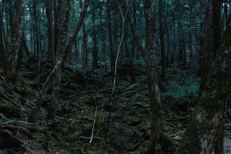 Jadi Tempat Ratusan Orang Bunuh Diri, Hutan Aokigahara Jepang Simpan Sejuta Misteri, Bahkan Kompas Tak Bisa Berfungsi di Sana