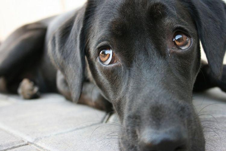 Anda Penyuka Anjing? Kenali 6 Perilaku Aneh Anjing dan Apa Maksudnya (2) - Semua Halaman - Intisari