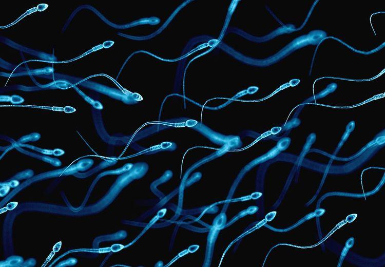 Istri Tak Kunjung Hamil?  Ini 5 Cara Mudah Untuk Memaksimalkan Jumlah Sperma