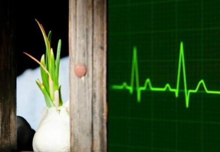 Jangan Buang Bawang Putih yang Sedang Tumbuh Daunnya, Ternyata Ini Khasiatnya