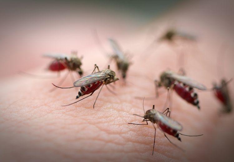Banyak Nyamuk Saat Musim Hujan Usai, Usir dengan 5 Cara Mudah Ini