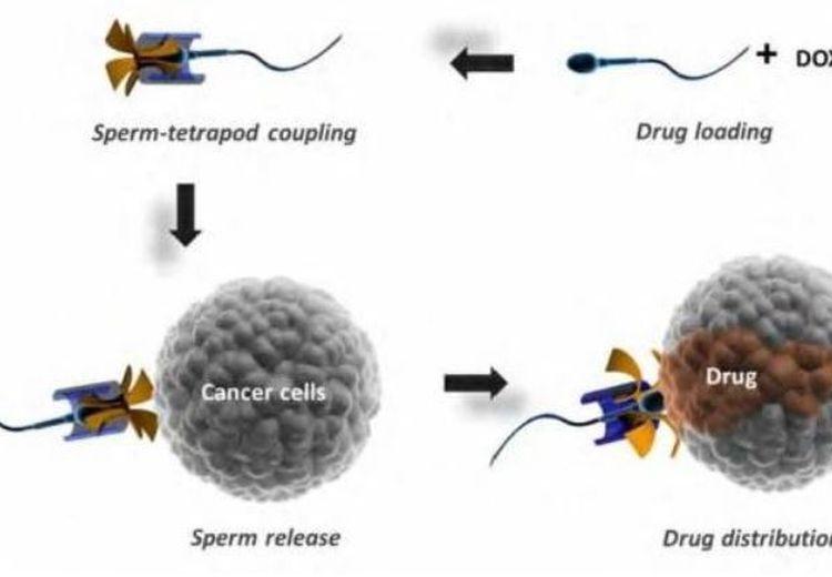 Peneliti Jerman Berhasil Menemukan Metode Berantas Kanker pada Wanita dengan Bantuan Sperma!
