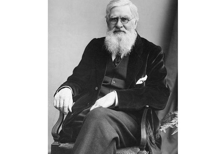 Alfred Wallace, Penjelajah Kepulauan Nusantara