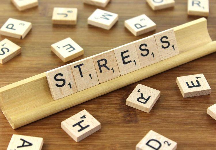 Sering Stres? Coba Deh Konsumsi 8 Makanan Ini Untuk Meredakannya