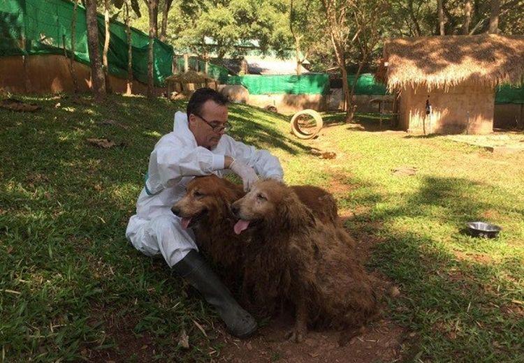 Puluhan Anjing Sekarat Berhasil Diselamatkan di Thailand, Berawal dari Keluhan Warga