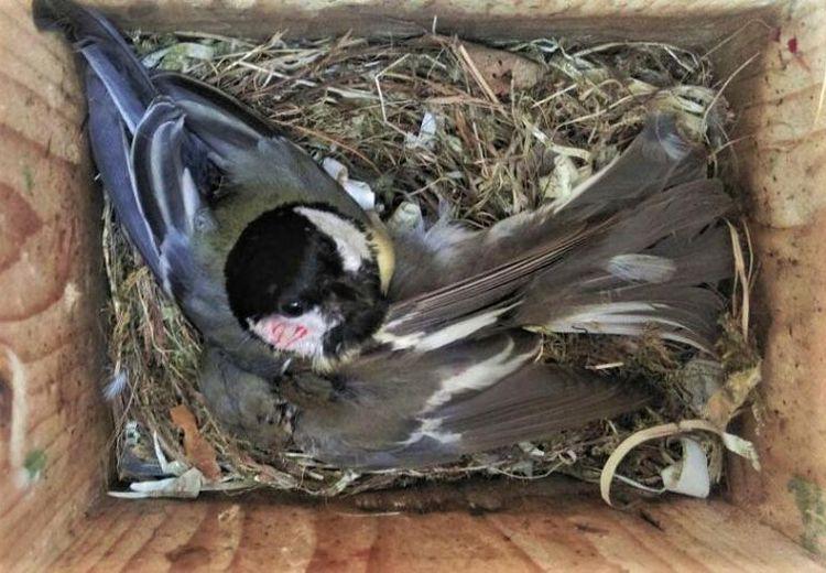 Perubahan Iklim Picu Perang Antara Dua Spesies Burung, Apa Alasannya?