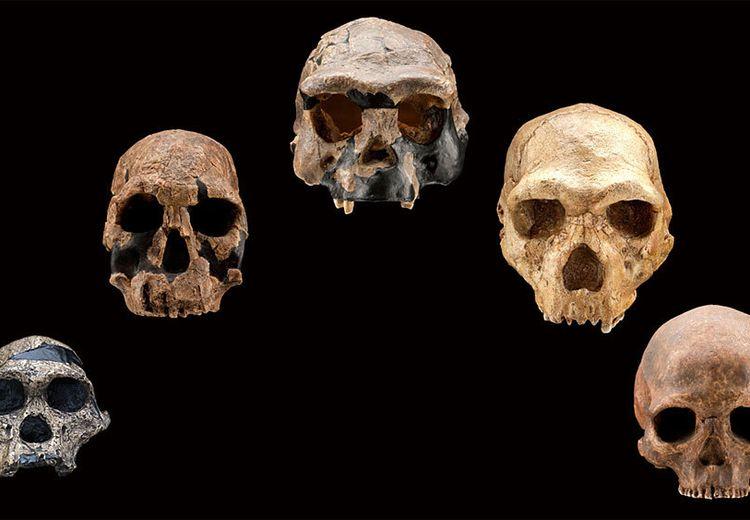 Bukti Evolusi, 9 Bagian Tubuh Ini Tak Lagi Dibutuhkan Manusia!