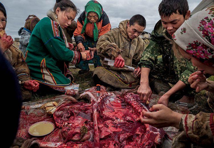 FOTO: Tradisi Suku Nenet Menyantap Daging Mentah
