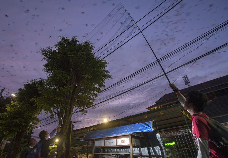 FOTO : Migrasi Burung Yang Melintas di Yogyakarta