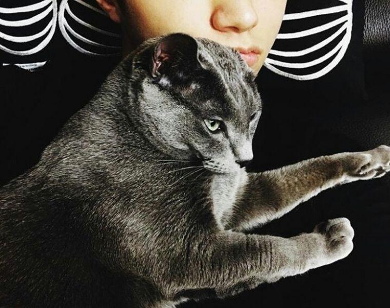 13 Seleb Korea Yang Memelihara Kucing Sama Sama Lucu Cewekbanget