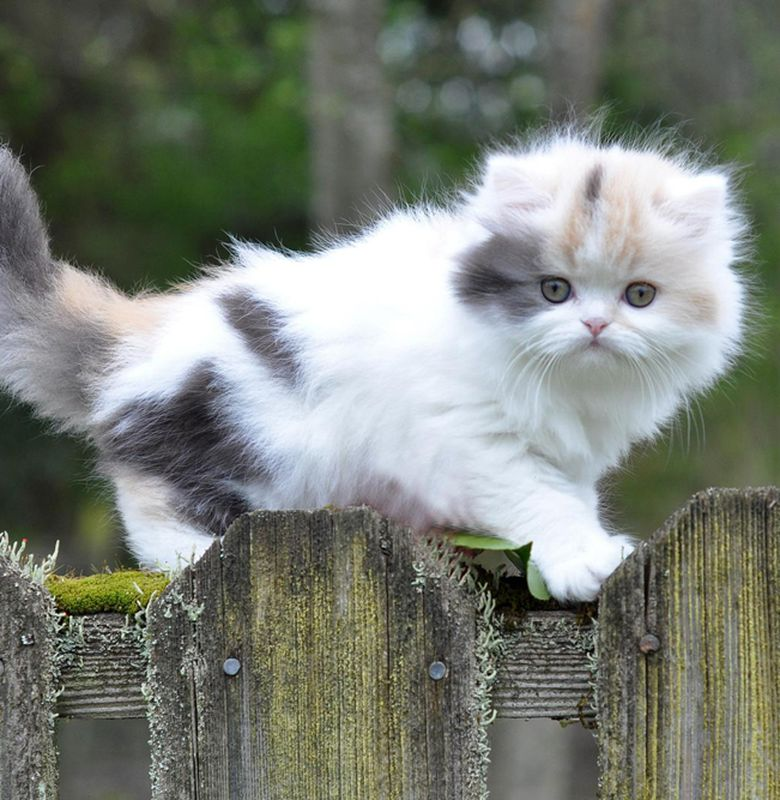 Kucing Kucing Ini Paling Disukai Di Jepang Bobo