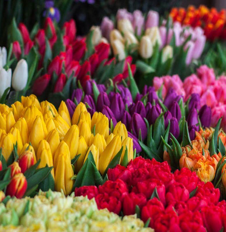 Ternyata Bunga Tulip Bukan Berasal Dari Belanda Ayo Kita Cari Tahu Fakta Lainnya Semua Halaman Bobo