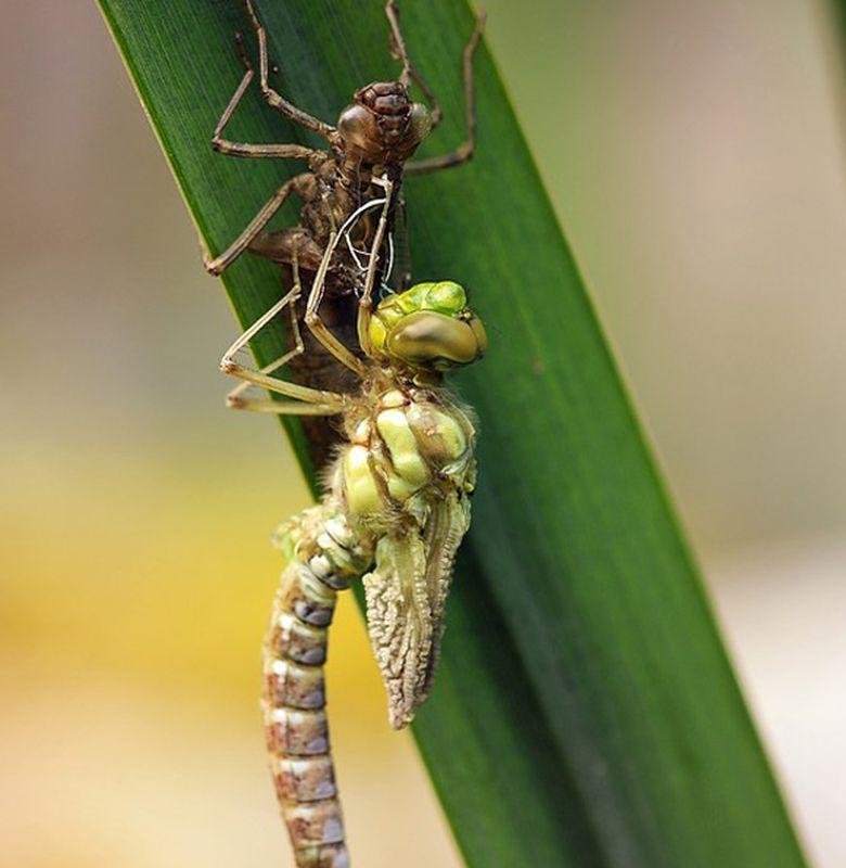 39++ Siklus hidup hewan serangga terupdate