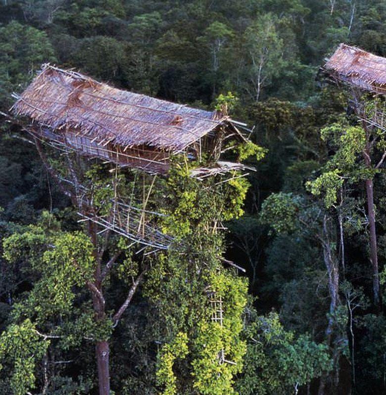 Suku Korowai yang Tinggal di Rumah Pohon - Semua Halaman - Bobo