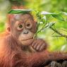 Gagal 'Meluncur' ke Alam Liar, Hewan-hewan Ini Tetap Bersama Induknya Hingga Besar