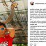 Perempuan di Sulawesi Tewas Dimangsa Ular, Panji Si Petualang Beri Komentar Ini