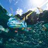 Kemasan Makanan dan Minuman Menjadi Sampah Terbanyak Kedua di Pantai