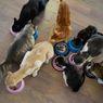 Setelah Disekap dalam Kandang Kecil, 375 Ekor Kucing Ini Berhasil Diselamatkan dari Rumah Jagal