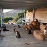 Digaji Lebih dari Rp6 Juta dengan Fasilitas Penuh Untuk Rawat 55 Ekor Kucing, Tertarik?