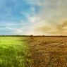 Lima Negara yang Mampu Bertahan dari Perubahan Iklim, Apa Rahasianya?