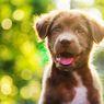 Mengidap Penyakit Misterius, Ratusan Anjing di Norwegia Sekarat