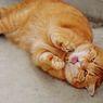 Kucing Juga Bisa Flu, Bagaimana Gejala dan Cara Merawatnya?