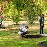 Arbor Day, Hari Libur Nasional di Nebraska untuk Menanam Pohon