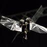 DelFly Nimble, Robot Bersayap Pengganti Lebah di Masa Depan