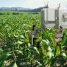 Tahun 2020, Ada 75 juta IoT di Sektor Pertanian